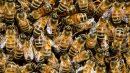 honeybee hive on comb