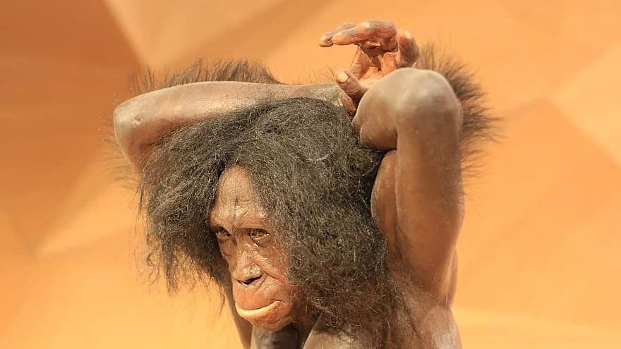 Neanderthal model