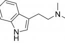 Psychedelic drug DMT