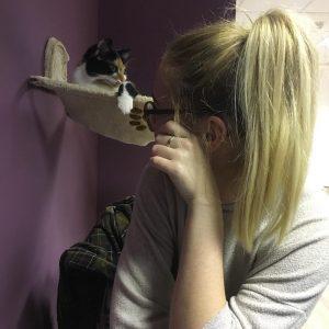 Feline Good Cat Cafe Review